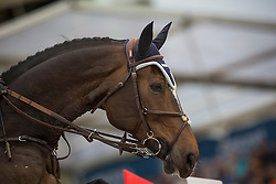 Devos Pieter (BEL) - Dream of India Greenfield<br /> Longines Global Champions Tour of Antwerpen 2014<br /> © Dirk Caremans