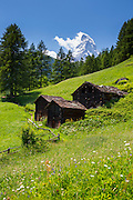 Chalet barns and wildflowers below the Matterhorn mountain in the Swiss Alps near Zermatt, Switzerland
