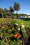 Poppy flowers, Picton, Marlborough, South Island, New Zealand