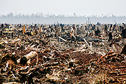 Rengat, Riau, IDN, 20070915:   The rain forest in Sumatra is disappearing fast. In Riau the forest is moved down, torched and replaced with palm trees to make palm oil.<br /> Photo: Orjan F. Ellingvag/ Dagens Naringsliv
