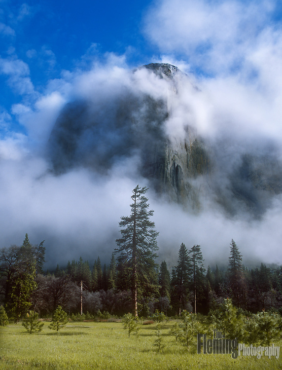 Early morning fog in Yosemite valley