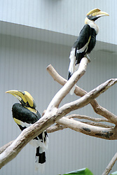 1993-94 - Some type of Toucan at St. Louis Zoo