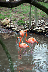 West Central Florida:  Flamingos are a main attraction at the Ellie Schiller Homosassa Springs Wildlife State Park.