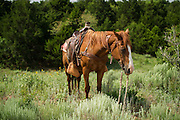 My horse patiently awaits me while I take pictures at Island Ranch in Ames, Oklahoma.