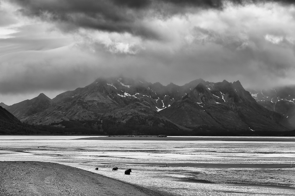 Brown bear sow and cubs (Ursus arctos) fishing for salmon in Horn Creek with the Chigmit Mountains in the background along Chinitna Bay in Lake Clark National Park in Southcentral Alaska. Summer. Afternoon.
