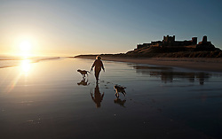 © Licensed to London News Pictures. 12/03/2012. Bamburgh, UK. A woman walking her dogs along Bamburgh beech past Bamburgh Castle at sunrise in Northumberland, North East England on March 12th, 2012. Photo credit : Ben Cawthra/LNP.