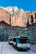 "Handy free shuttle buses drive visitors to scenic stops (such as here at ""The Temple of Sinawava"") through Zion National Park and Springdale, in Utah, USA. Travel on the scenic six-mile Zion Canyon Scenic drive is now thankfully closed to private cars and limited to buses, thereby reducing traffic and improving visitor experience. Visiting the canyon is now much more relaxing compared to when cars fought for space on the narrow Scenic Drive. The North Fork of the Virgin River carved spectacular Zion Canyon through reddish and tan-colored Navajo Sandstone up to half a mile (800 m) deep and 15 miles (24 km) long. Uplift associated with the creation of the Colorado Plateaus lifted the region 10,000 feet (3000 m) starting 13 million years ago. Zion and Kolob canyon geology includes 9 formations covering 150 million years of mostly Mesozoic-aged sedimentation, from warm, shallow seas, streams, lakes, vast deserts, and dry near-shore environments. Mormons discovered the canyon in 1858 and settled in the early 1860s. U.S. President Taft declared it Mukuntuweap National Monument in 1909. In 1918, the name changed to Zion (an ancient Hebrew name for Jerusalem), which became a National Park in 1919. The Kolob section (a 1937 National Monument) was added to Zion National Park in 1956. Unusually diverse plants and animals congregate here where the Colorado Plateau, Great Basin, and Mojave Desert meet."