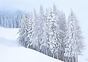 Quiet Winter Forest on Mountainside, Spokane, Washington