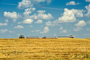 swathing wheat<br /> Morin<br /> Alberta<br /> Canada