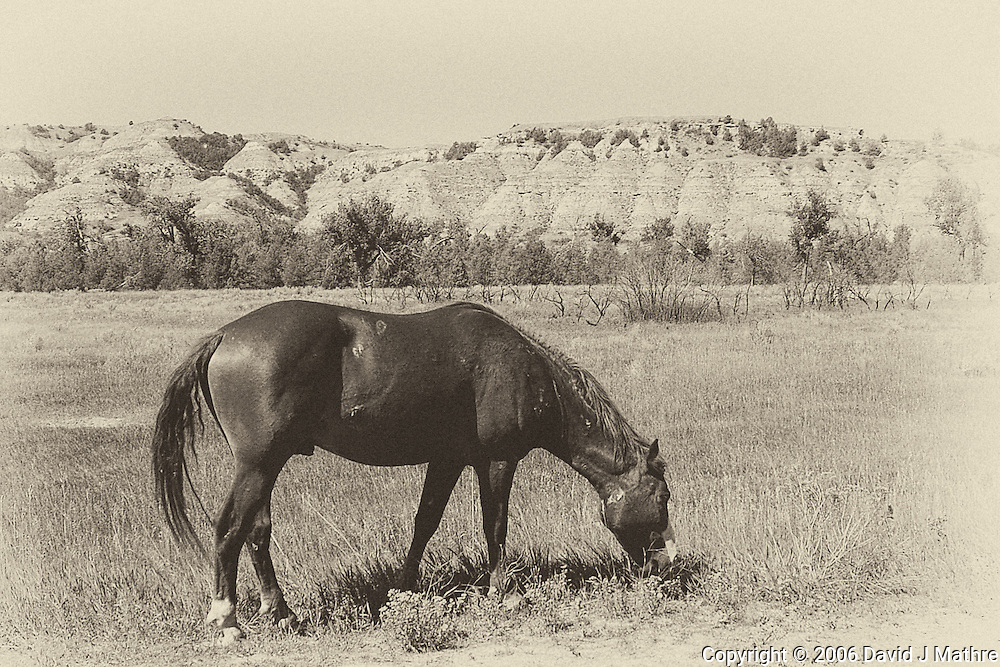 Wild Horse in Theodore Roosevelt National Park. Image taken with a Nikon D200 and 18-70 mm kit lens (ISO 100, 18 mm, f/5.6, 1/400 sec). Converted to B&W with Nik Silver Efex Pro 2.