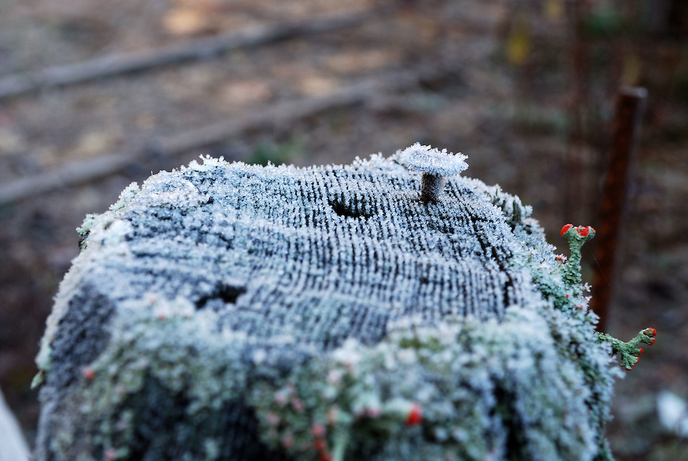 Frost Fencepost