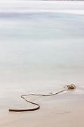 Kelp and Surf, Carmel Beach, California