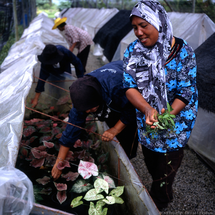 "Women farmng in Rotan Batu..Rotan Batu, also known informaly as ""Widdows village"" started functioning in 2004 as a project that was funded and created by Thailand's Queen Sirikit, who donated 20m baht ($514,000) of her own money to purchase the land on which the village is now located. Its purpose is to give shelter and work to mainly Muslim widows who lost their husbands during the insurgency in the south of Thailand. They now live there about 450 people, the widows together with other members of their families. The village is self sufficient as there is enough farm-land where they produce the vegetables and fruit for themselves and sell the extra production in local markets. They also create handcrafts which are sold as souvenirs in other parts of Thailand giving them some extra income. The village is considered quite safe but it is guarded by solders 24 h a day to make sure no attack happens there."