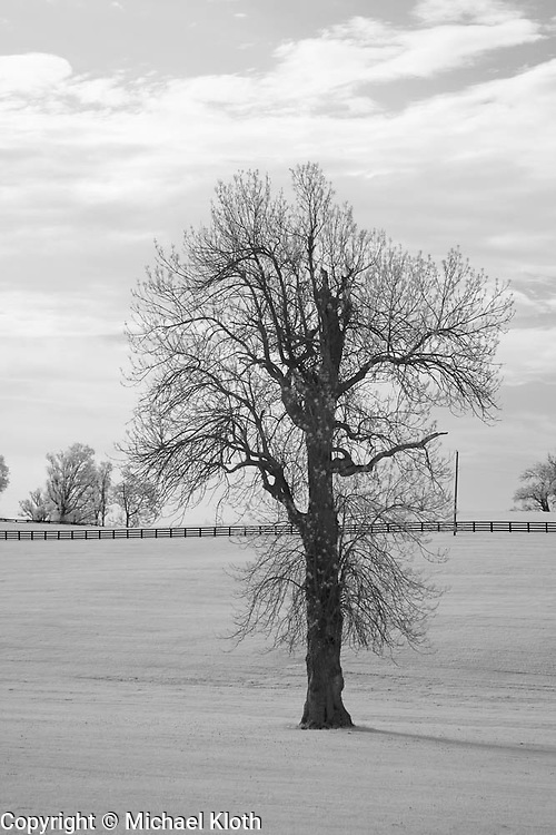 Winter walnut tree in a rural Kentucky horse pasture.  Infrared (IR) landscape photograph by fine art photographer Michael Kloth. Black and white infrared photographs