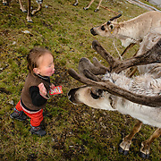 A three-year-old boy is teasing a reindeer in a Dukha (Tsaatan) settlement in the taiga, Mongolia. Approximately 200 families comprise the Tsaatan or Dukha community in northwestern Mongolia, whose existence is intimately linked to their herds of reindeer. Photo © Robert van Sluis