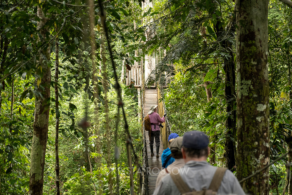 Lindblad Expeditions guests walk over a rope bridge in the canopy of the rainforest at Amazon Natural Park near Nauta in the Peruvian Amazon.
