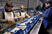 Nederland, Huissen, 20-4-2005..Poolse werknemers, arbeidskrachten, personeel, uitzendkrachten maken asperges klaar voor levering aan een klant.  Arbeidsmigratie uit Polen, tijdelijke werkvergunning, werkgelegenheid, arbeidsethos. personeelstekort werkloosheid, CWI...Vaak worden zij geworven door een uitzendbureau, uitzendburo, in Polen zelf...Foto: Flip Franssen/Hollandse Hoogte