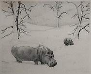 HIPPOPOTAMI, WINTER, ink drawing 1980