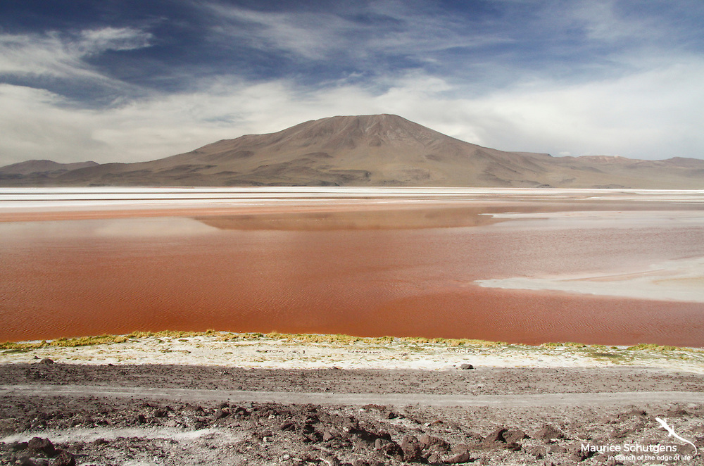 Stunning lagunas in the high altitude desert of Eduardo Avaroa National Park, Chile.