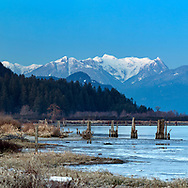 Winter scene including Osprey Mountain and the Pitt River from the Traboulay Poco Trail in Port Coquitlam, British Collumbia, Canada.