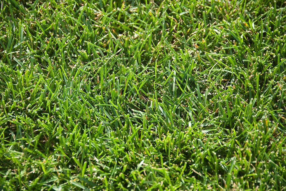 Turfgrass test plots