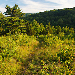 The Appalachian Trail on Tyringham Cobble, Tyringham, Massachussets.