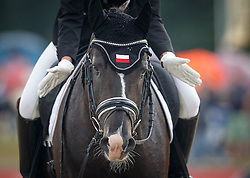 Michelfeit Catherine, (AUT), Ti Amo M<br /> First Qualifier 6 years old horses<br /> World Championship Young Dressage Horses - Verden 2015<br /> © Hippo Foto - Dirk Caremans<br /> 07/08/15