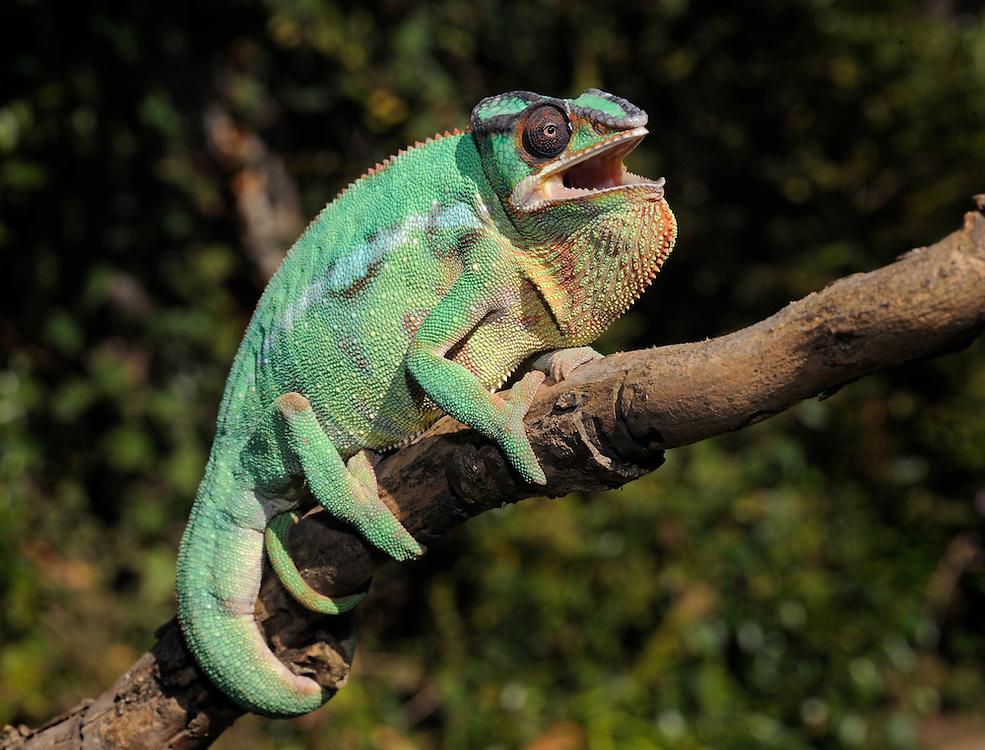 Madagascar - Nosy Mitsio