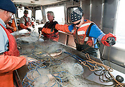 PRICE CHAMBERS / NEWS&amp;GUIDE<br /> Michael Veneziani, Will Holden, Leo Romanowski and Heather Paddock and work on a gill net boat, removing lake trout from the long nets dragged behind the small vessel as it trawls around Yellowstone Lake. The fish that are caught and killed are measured and sexed before being dumped back into deep water.