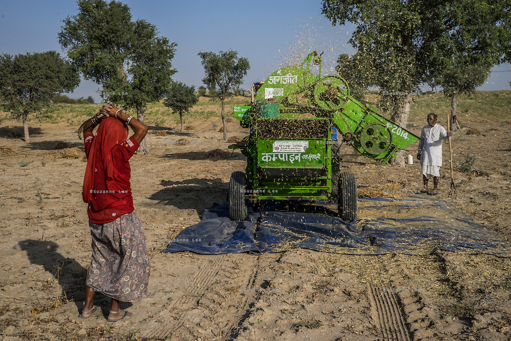 Guar farmer Pemaram Jangu, 70, and his wife Jhuma Jangu, 65, thresh their crop in their field in Hameira village, Bikaner, Rajasthan, India. Non-Profit Organisation Technoserve works with Guar farmers in Bikaner to provide technical farming knowledge to them, improving their crop yield through good agricultural practices. Photograph by Suzanne Lee for Technoserve