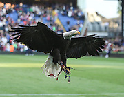 Kayla the eagle - Crystal Palace v Dundee - Julian Speroni testimonial match at Selhurst Park<br /> <br />  - © David Young - www.davidyoungphoto.co.uk - email: davidyoungphoto@gmail.com