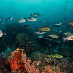 Dive Spot: Sardines