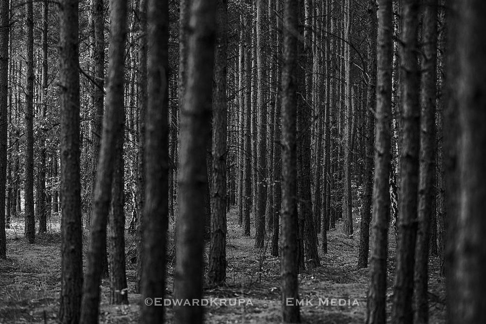 Zagan Pines 8