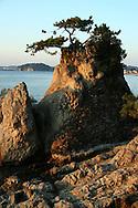Japanese Pine Tree, Shonan Coast