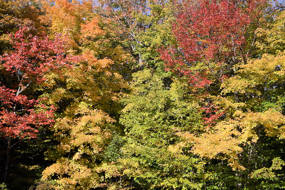 Fall trees with red, orange, yellow, green leaves.