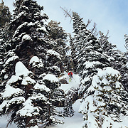 Tigger Knecht skis backcountry powder in the Tetons near JHMR.
