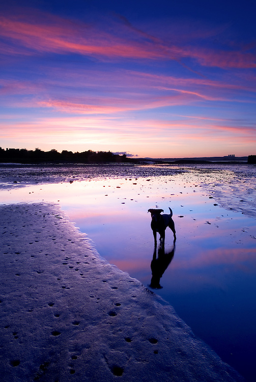 An evening stroll led to this wonderful image of Harvey. My wife held a stone ready for him to catch, this kept him still while the sky above us turned the most amazing colours.