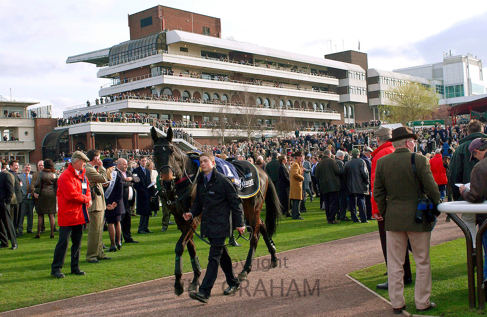 A general view of the racing scene at the Cheltham Festival.  A race horse is being led through the crowds to the unsaddling enclosure.