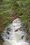 Ephemeral stream and conifer forest in early summer. Kootenai National Forest in the Purcell Mountains, northwest Montana.