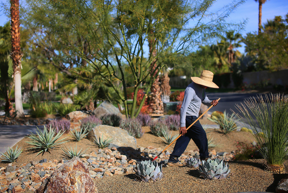 A landscaper manages a drought tolerant landscaping at a home in the Mission Hills Country Club in Rancho Mirage, California on Thursday, January 21, 2016. California's drought-ridden cities are on track to collectively meet Gov. Jerry Brown?s call last year for a 25% reduction in water usage, despite a notable laggard: the state?s desert resort areas. Many desert agencies continue to miss their targets, even after some have been slapped with fines.(Photo by Sandy Huffaker)
