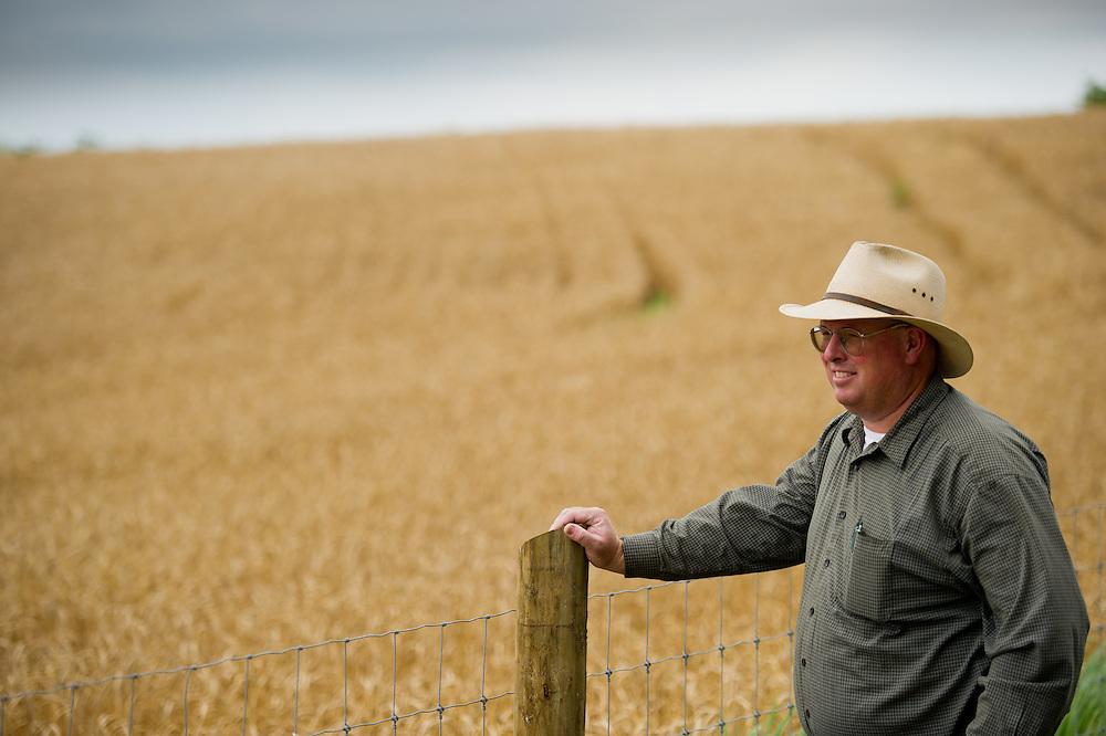 Grain farmer overlooking fields of wheat