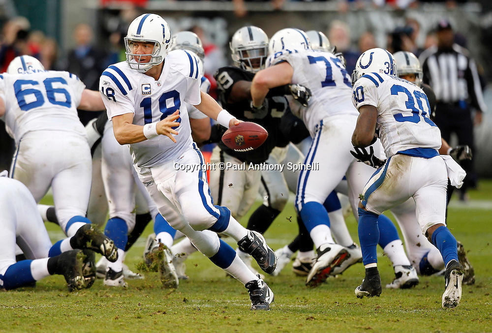 Indianapolis Colts quarterback Peyton Manning (18) fakes a handoff and runs 27 yards on a bootleg keeper for a first down at the Oakland Raiders four yard line with less than two minutes left during the NFL week 16 football game on Sunday, December 26, 2010 in Oakland, California. The Colts won the game 31-26. (©Paul Anthony Spinelli)
