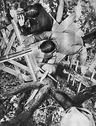 World War I 1914-1918: French observation post in an oak tree in the Woevre region of Lorraine, northeastern France.  From 'Le Flambeau', Paris, September 1915.