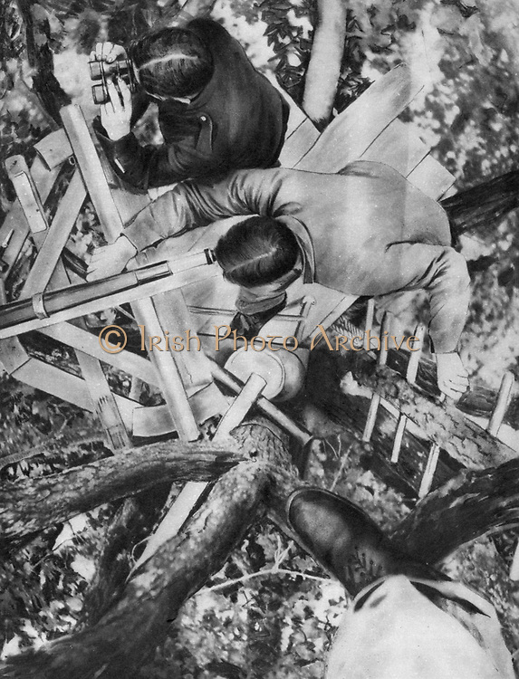 World War I 1914-1918: French observation post in an oak tree in the Woevre region of Lorraine, northeastern France.  From 'Le Flambeau', Paris, September 1915.