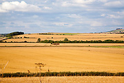 Summer chalk landscape of golden rolling arable fields view north west from near Aldbourne, England, UK
