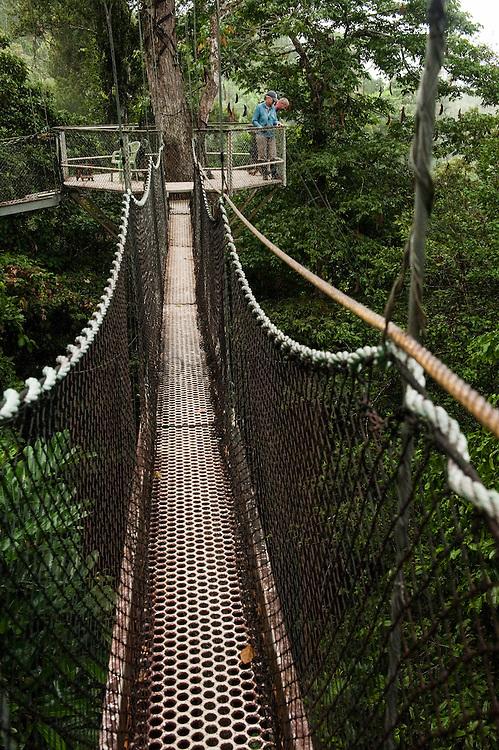 Canopy Walkway<br /> Atta Lodge<br /> Iwokrama Forest Reserve<br /> GUYANA<br /> South America