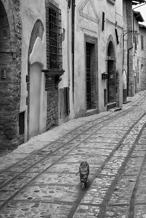 Cat in Bevagna