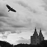 Bird over Central Park<br /> Limited Edition Print