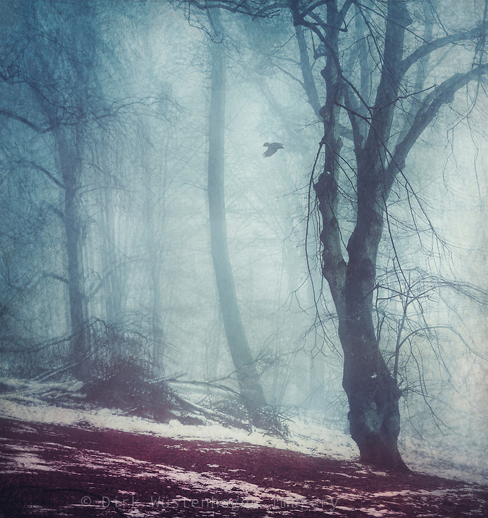 Forest clearing with snow on a misty day - textured and manipulated photograph