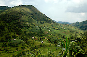 The lush green landscapes of Uganda. Uganda, Africa.